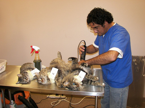 Veterinary Technician Schools in Florida